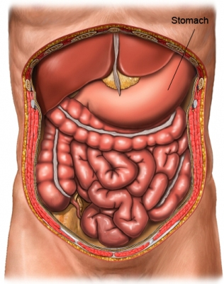 gastro intestinal stomach