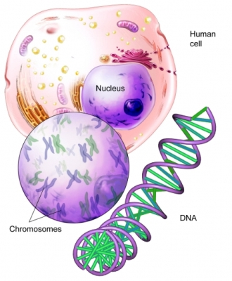 Chromosome DNA