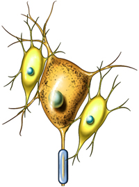 Neuronas
