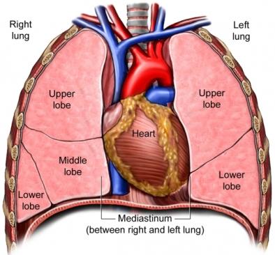 BQ00042 97870 1 Regions Lung