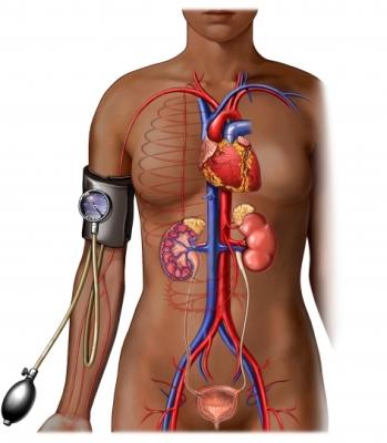 Presión arterial elevada y órganos