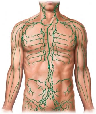 Nódulos linfáticos masculinos