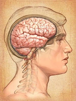 Cerebro hombre rostro