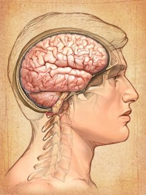 Cara, hombre, cerebro
