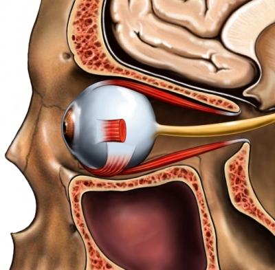 Nervio de la cavidad ósea del ojo