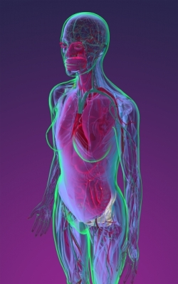 Female figure 3D