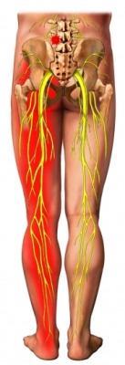Leg Nerves