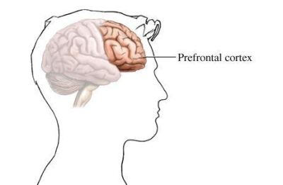 Corteza prefrontal