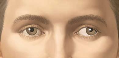 factsheet image