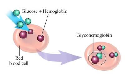 glucosa y RBC