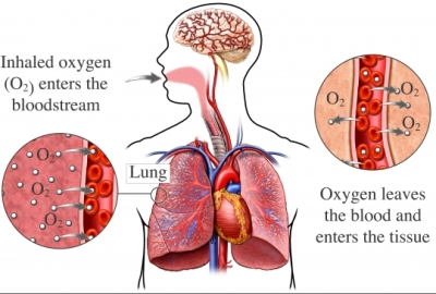 Respiraci&oacute;n pulmonar
