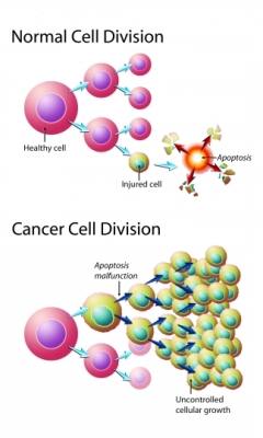 Cancer Cell Division