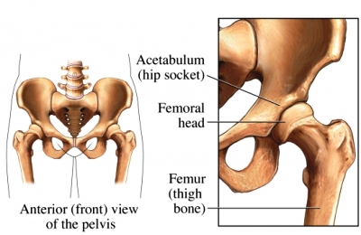 hip socket